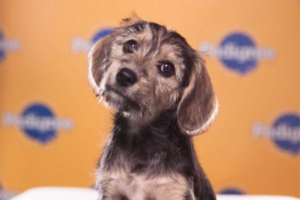 Puppy Bowl MVP Marta