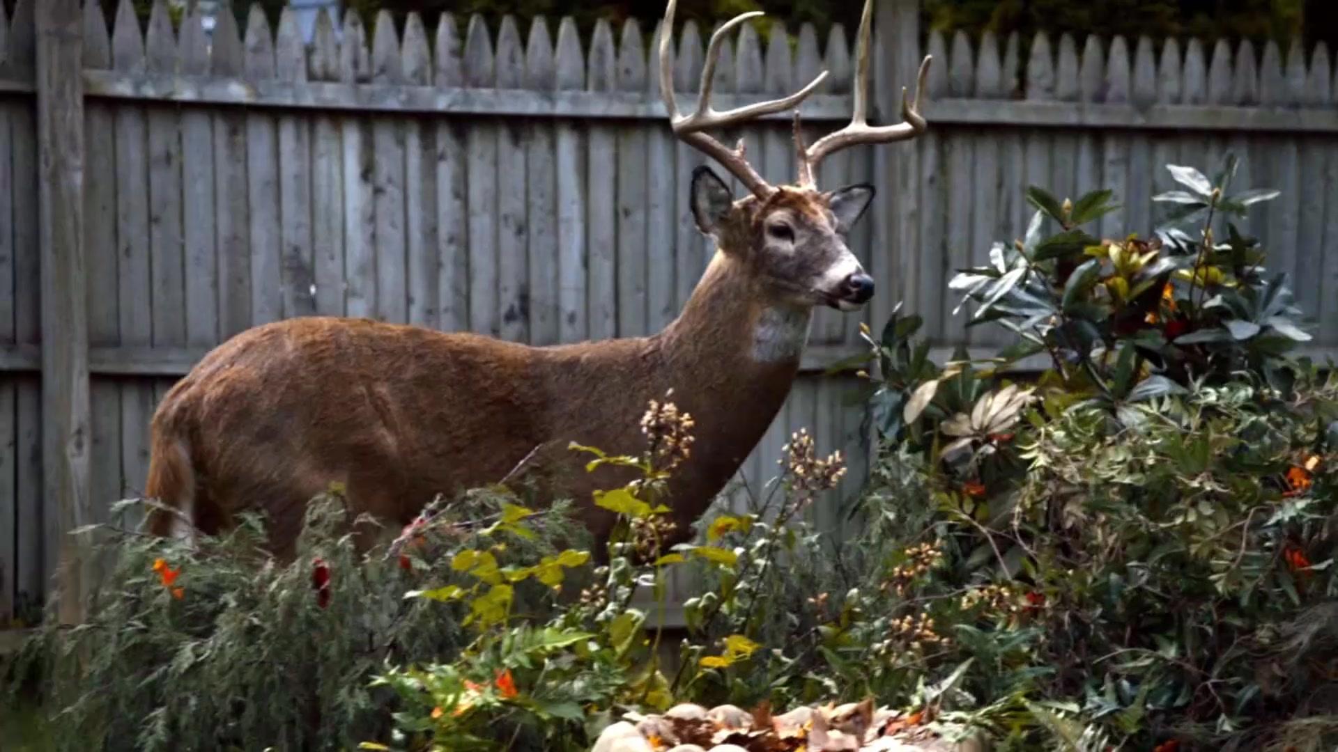 leftovers_deer_yard