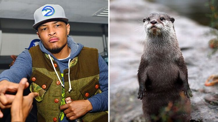 T.I. and Otter