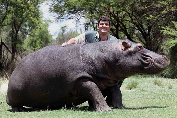 Marius Els and Hippo