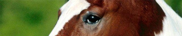 Arjen Robben Horse Eyes - 5