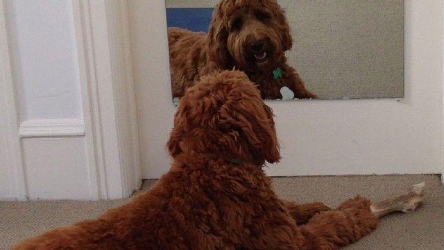 Katie Baker's dog, Stanley