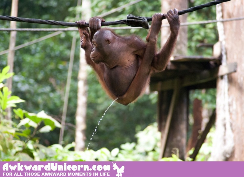 monkey_peeing