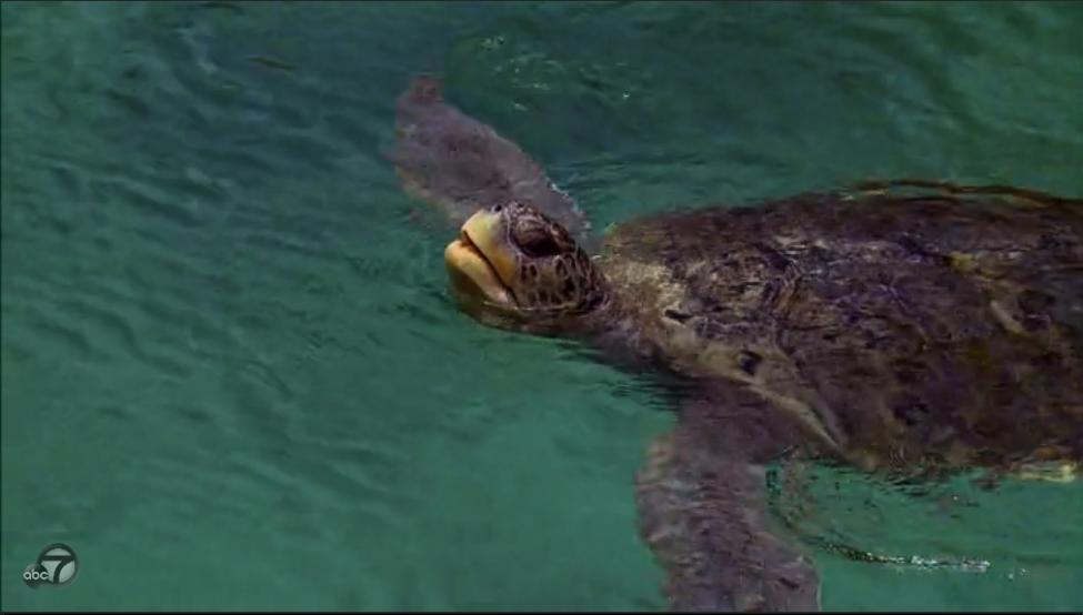 bip-turtle