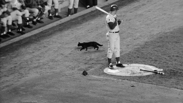 Black Cat Passes Baseball Player Ron Santo During Game
