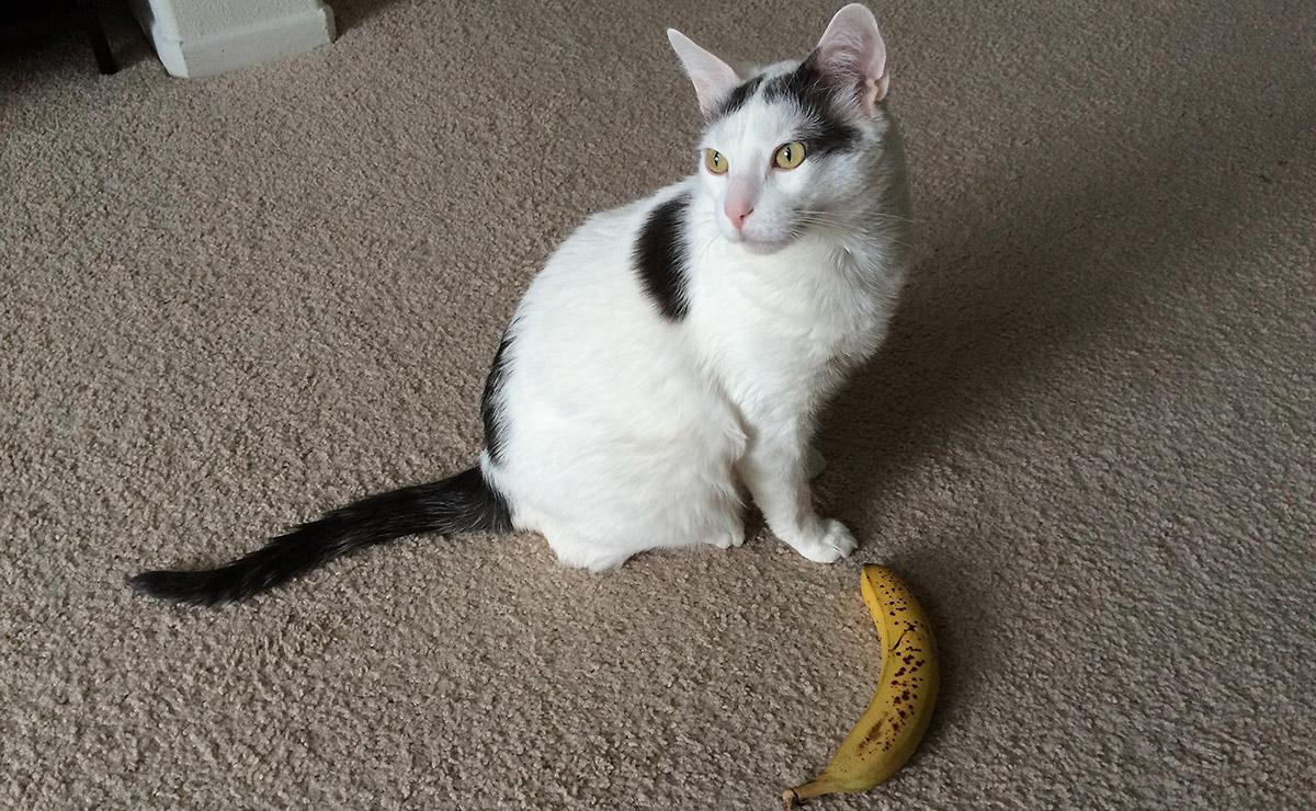halo-banana-disinterest