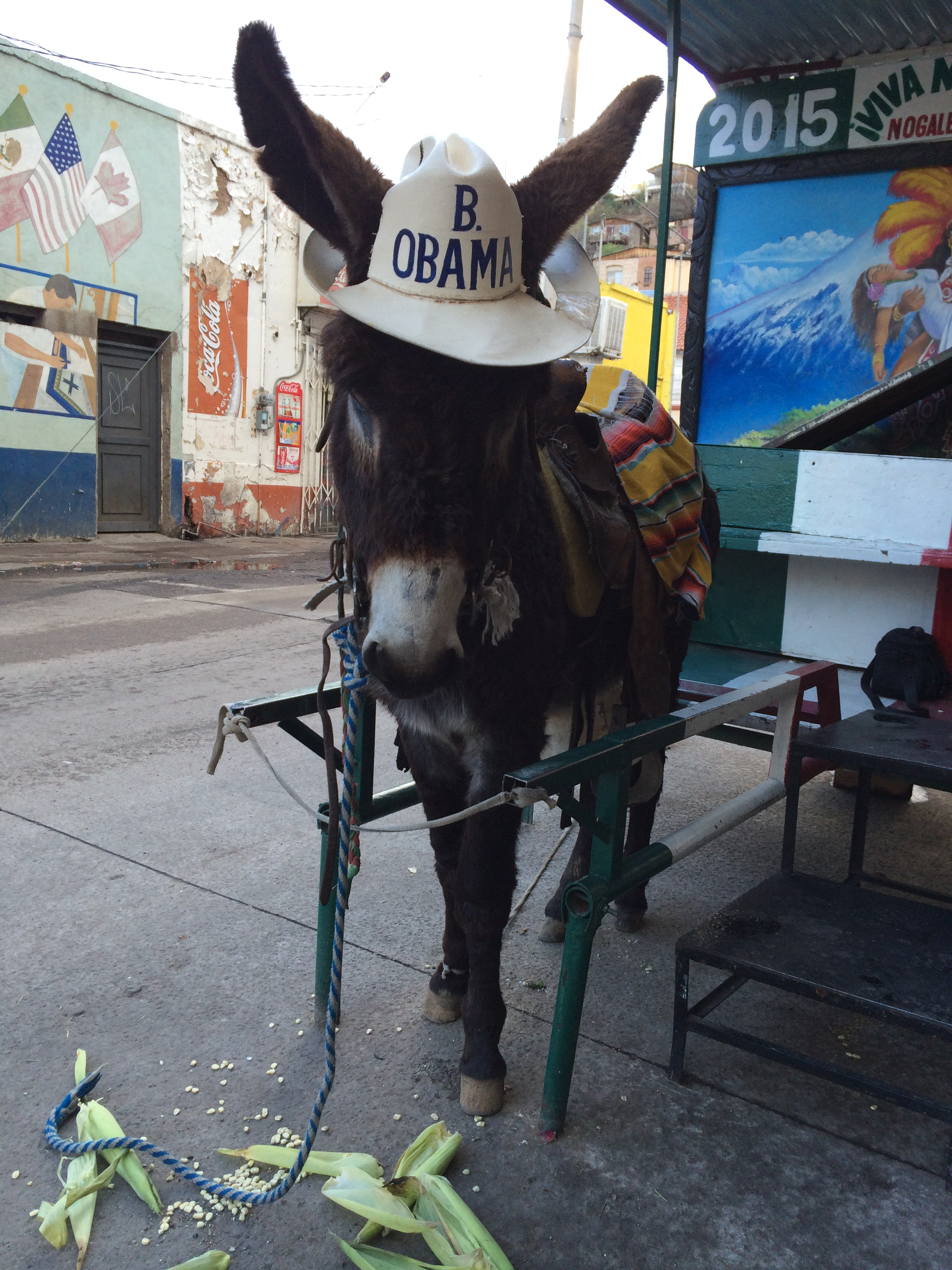 obama-barack-burro