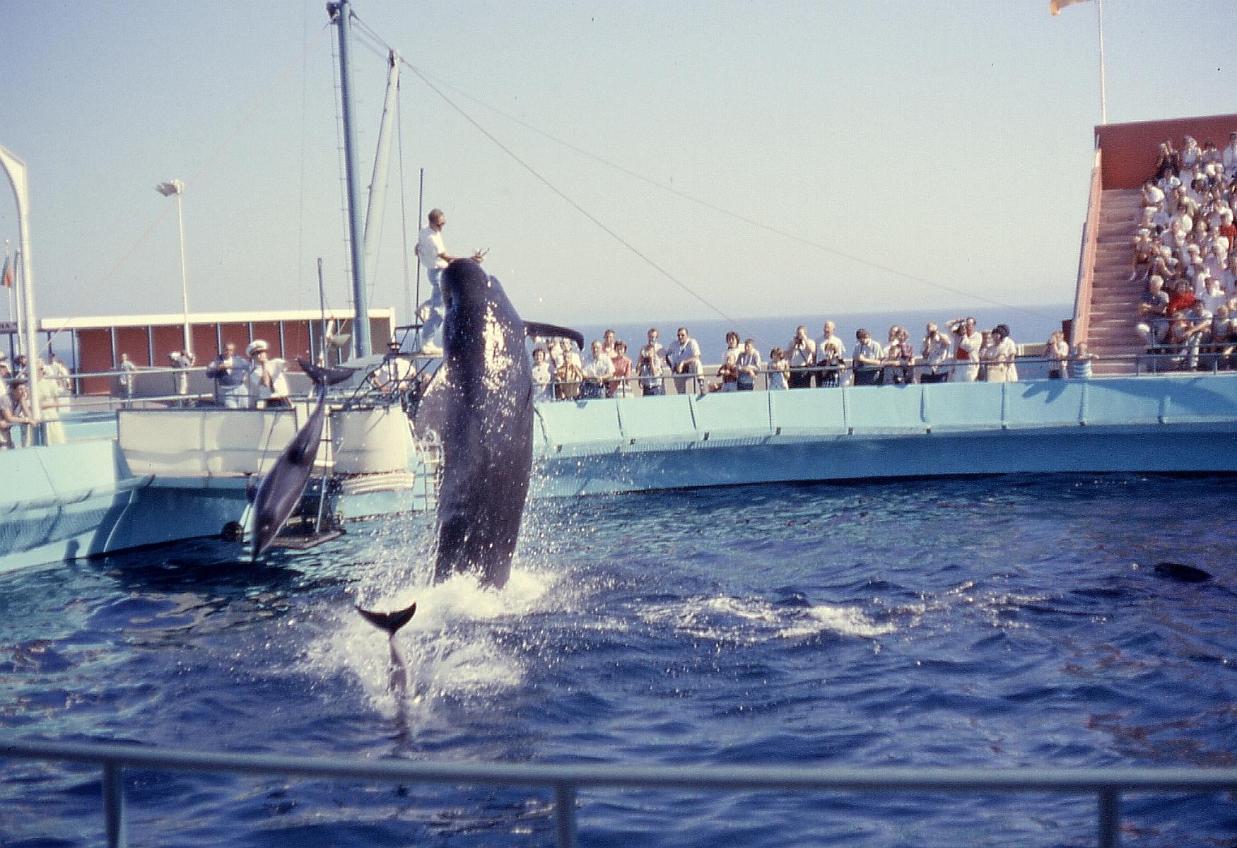 6208-MarineLandPilotWhale&DolphinShow