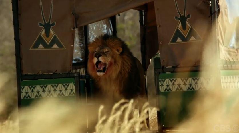 zoo_lionbus