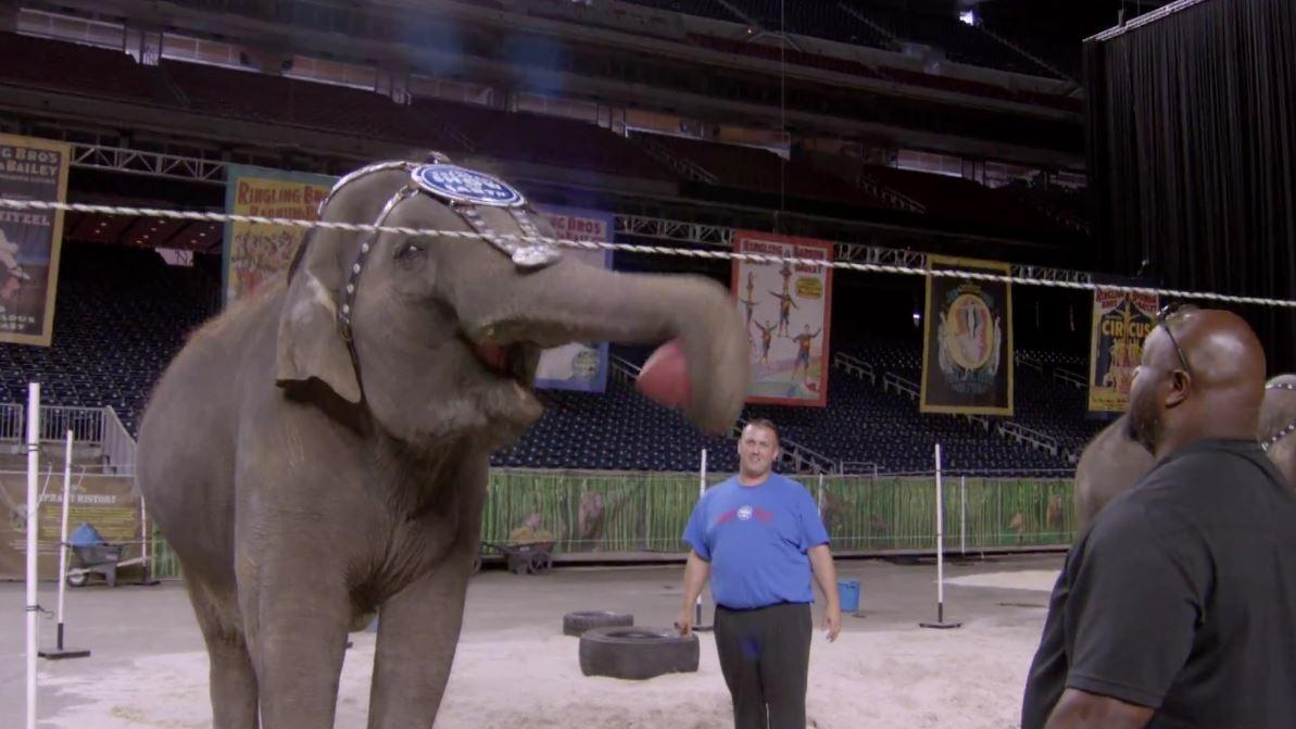 wilfork_elephant